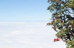 Rose Azalea und Berge Stockbild