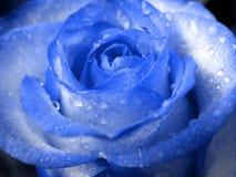 Rose azul Imagen de archivo libre de regalías