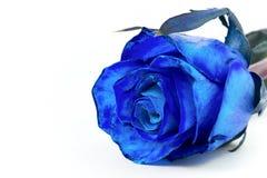 Rose azul Fotografía de archivo libre de regalías