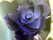 Rose azul Foto de archivo libre de regalías
