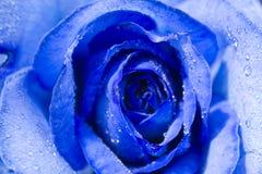 Rose azul con rocío Imágenes de archivo libres de regalías