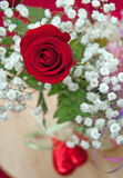 Valentines Rose and Babys Breath Royalty Free Stock Images