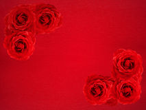 Rose background. Red rose corner borders on red textured background Stock Image
