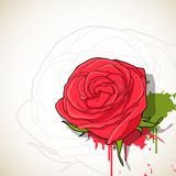 Rose, background Stock Photography