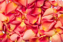 Rose background Stock Photos