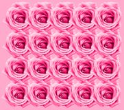 Rose Background Stock Images