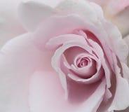 Rose Background abstraite avec des gouttelettes d'eau Images libres de droits