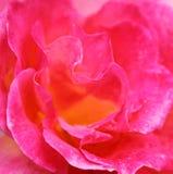 Rose Background abstraite avec des gouttelettes d'eau Photographie stock