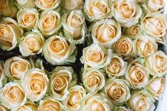 Rose Background amarela, close-up dos muitos cor pastel coloriu rosas Fotos de Stock