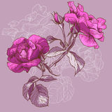 Rose Background inconsútil hermosa ilustración del vector