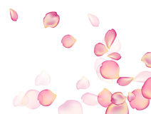 A rose  Background. Stock Image
