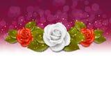 Rose background Stock Photography