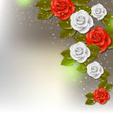 Rose background Royalty Free Stock Photos