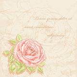 Rose  background Royalty Free Stock Image