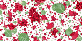 Rose background (on white) Royalty Free Stock Image