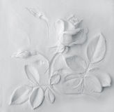 white Rose background Royalty Free Stock Photo