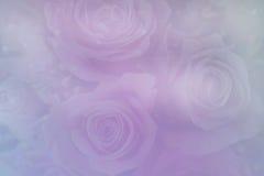 Rose Backgrounds en colores pastel suave Fotografía de archivo libre de regalías