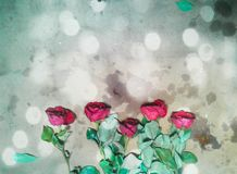 Rose backgrounds. Light color red rose creative stock photos