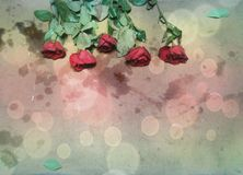 Rose backgrounds. Red roses creative light stock photos