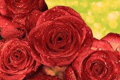 Rose bagnate rosse con le goccioline di acqua Fotografie Stock Libere da Diritti