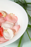 Rose & Bamboo. Rose petal bath with bamboo foliage Royalty Free Stock Photo