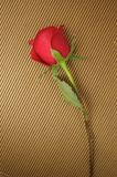 rose band för red Arkivfoto