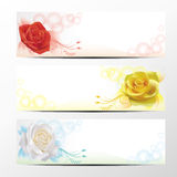 Rose banner collection 1 Stock Photography