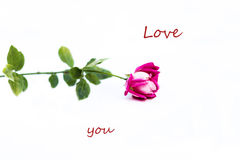 Rose. Beautiful image Rose.Love. Valentine Royalty Free Stock Photo