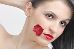 Rose beauty Stock Photo