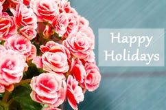 Rose begonia flower Royalty Free Stock Images
