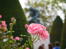 Rose beim Rodin Stockfotografie