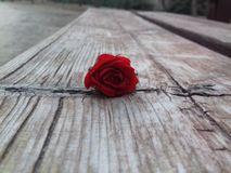 A rose on a bench stock photography