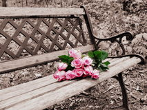 Rose on Bench Selective Color Stock Images