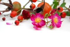 Rose and berries Royalty Free Stock Photography