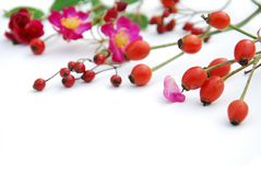 Rose and berries Royalty Free Stock Images