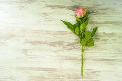 Rose in Bezug auf rustikale Bretter Stockfotografie
