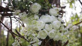 Rose bianche adorabili del cespuglio Fiori bianchi ornamentali sul sole luminoso Rose tenere in giardino Belle rose con verde Immagine Stock
