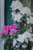 Rose bianche e dentellare immagine stock libera da diritti