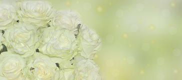 Rose bianche fresche con della tinta di fine il fondo verde chiaro su - Fotografia Stock Libera da Diritti