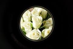 Rose bianche nel telaio circolare Fotografia Stock Libera da Diritti