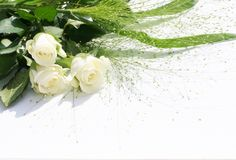 Rose bianche sopra bianco Fotografia Stock