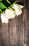 Rose bianche sullo spazio di legno del testo del fondo Retro annata Fotografia Stock Libera da Diritti