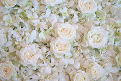 Rose bianche utili per fondo Fotografia Stock Libera da Diritti