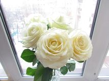 Rose bianche in Windows Fotografia Stock
