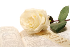 Rose And Bible Stock Images