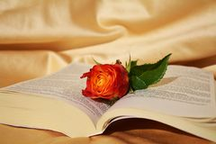 Rose and the Bible Stock Image