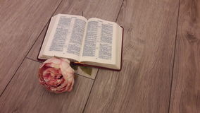 Rose and the Bible. Delicate rose on the open Bible on the background of the gray wooden boards Royalty Free Stock Image