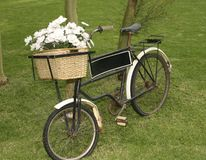 Rose bicycle. Bicycle with white flowers in basket royalty free stock photo