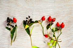 rose biodra Zdjęcia Royalty Free