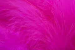 Rose Bird  feathers Stock Photos